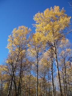 Bemidji Itasca Park MN